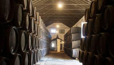 Free Tour Logroño Bodega